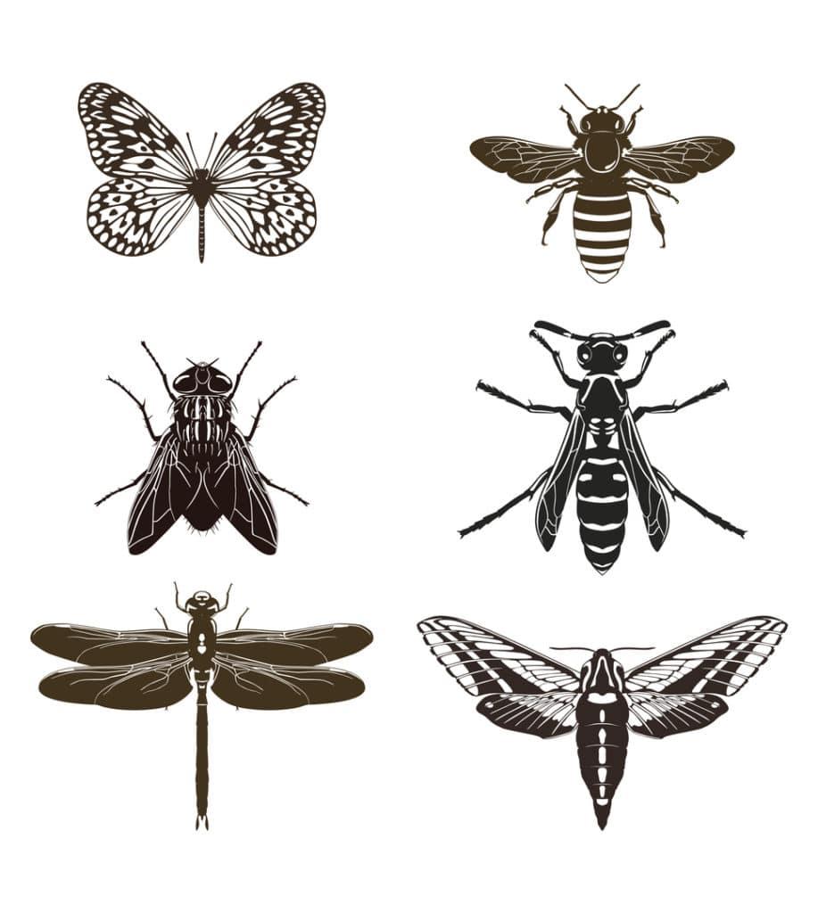 Distintas ilustraciones de insectos como mariposas y moscas.